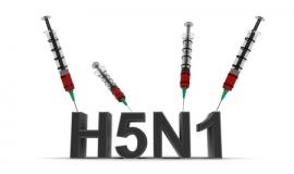 Pflichtimpfung gegen die Newcastle-Krankheit (23.07.2016)