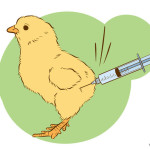 670px-Vaccinate-Chickens-Step-1-Version-2